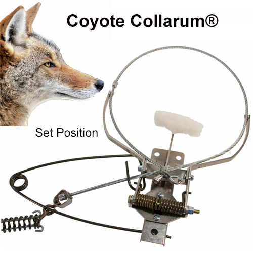 COLLARUM®Live Capture canine device (Coyote Model)