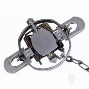 Duke 1 3/4 Four Coil Standard Jaw Traps - Single