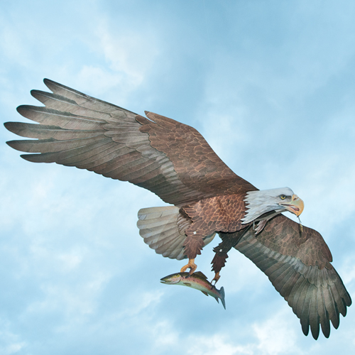 Flying eagle kite assembled wildlife control supplies product flying eagle kite unassembled altavistaventures Gallery