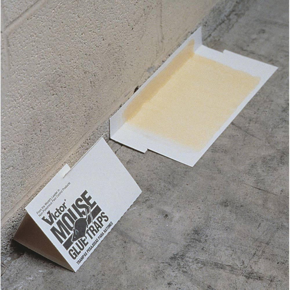 Victor M320 Holdfast Glue Boards 8 5 Quot X 5 Quot Wildlife