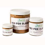Red Fox Glands - Ground, Aged & Preserved