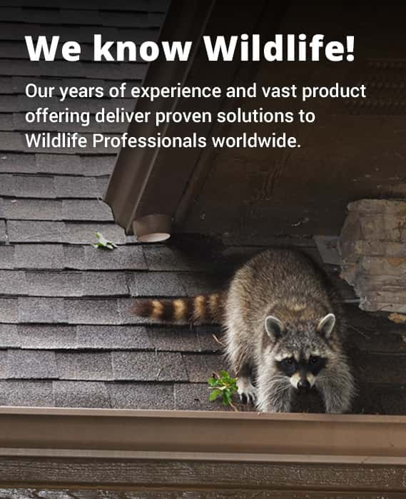 wildlife removal and repair